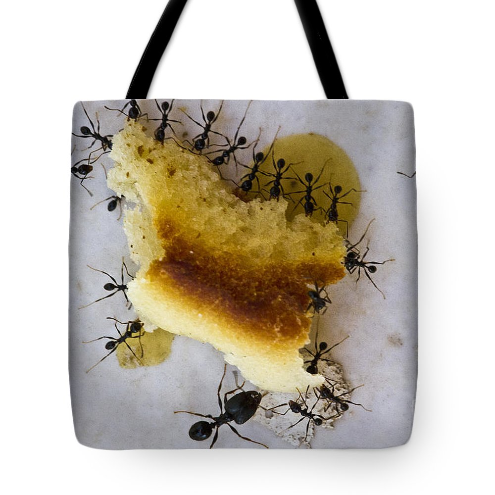 Heiko Tote Bag featuring the photograph Together We Are Strong by Heiko Koehrer-Wagner