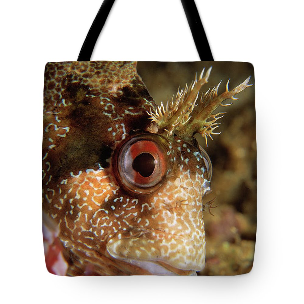Fn Tote Bag featuring the photograph Tompot Blenny Portrait by Hans Leijnse
