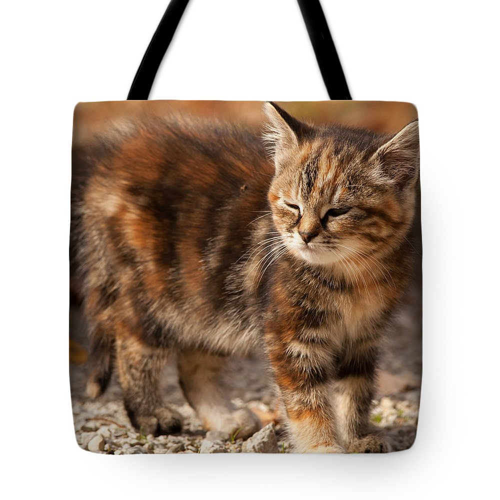 Kitten Tote Bag featuring the photograph Too Bright by Richard Kitchen