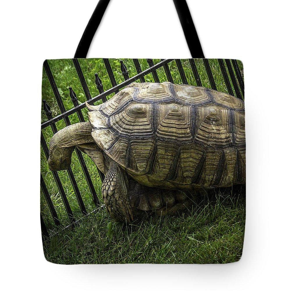 Tortoise Tote Bag featuring the photograph Tortoise Turtle Time by LeeAnn McLaneGoetz McLaneGoetzStudioLLCcom
