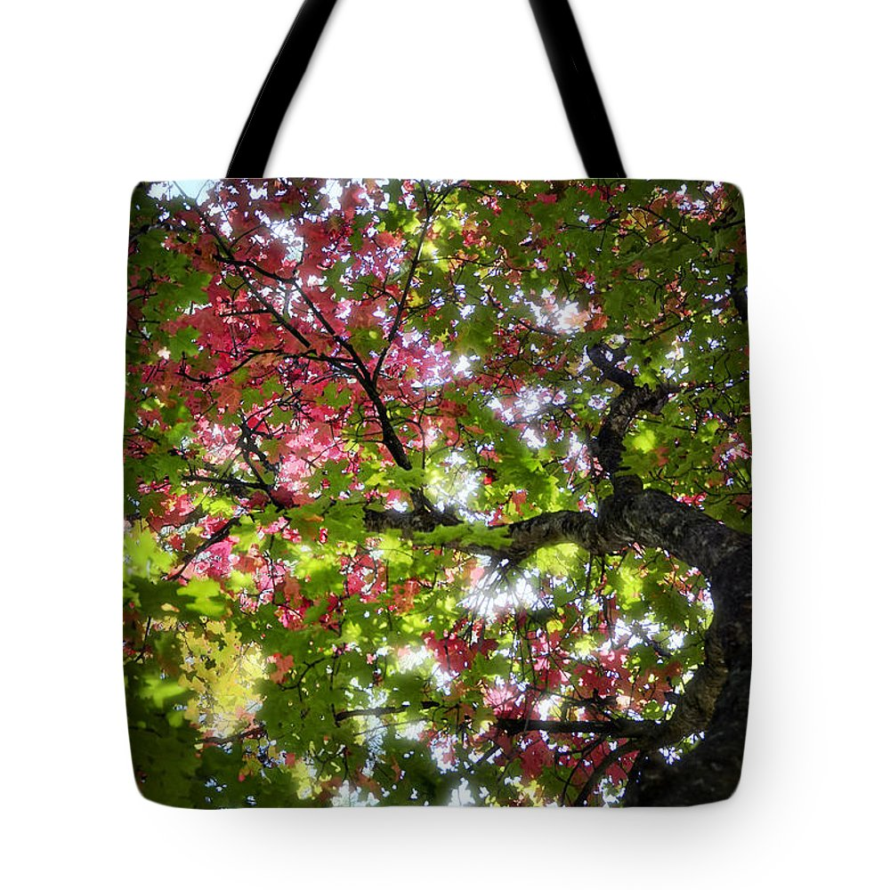 Tree Tote Bag featuring the photograph Touches Of Autumn by Saija Lehtonen