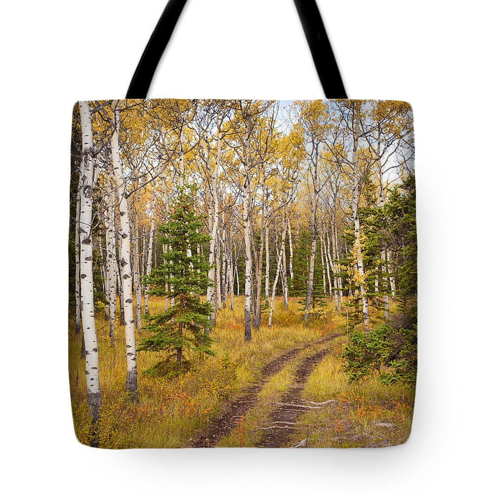 Populus Tote Bag featuring the photograph Trail In Golden Aspen Forest by Stephan Pietzko