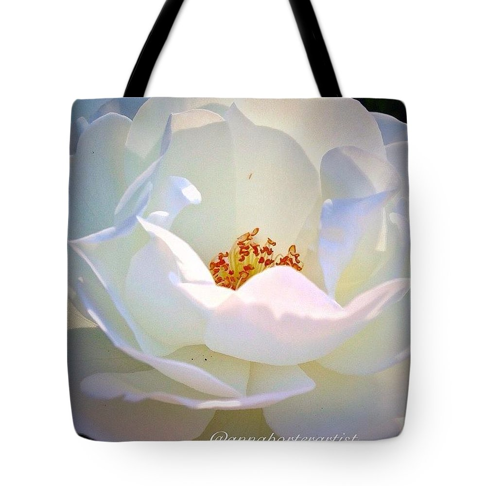 Transcendence White Rose Tote Bag featuring the photograph Transcendence White Rose by Anna Porter