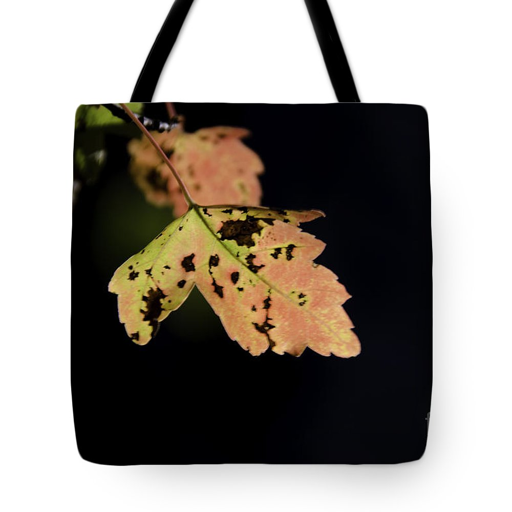 Maple Leaf Tote Bag featuring the photograph Translucent Maple Leaf by Dale Powell