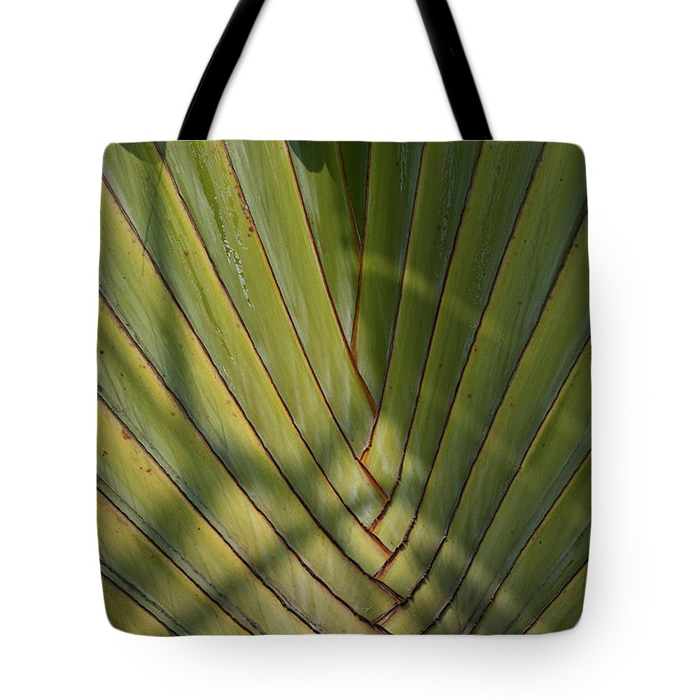 Bangkok Tote Bag featuring the photograph Traveller's Palm Patterns Dthb1543 by Gerry Gantt
