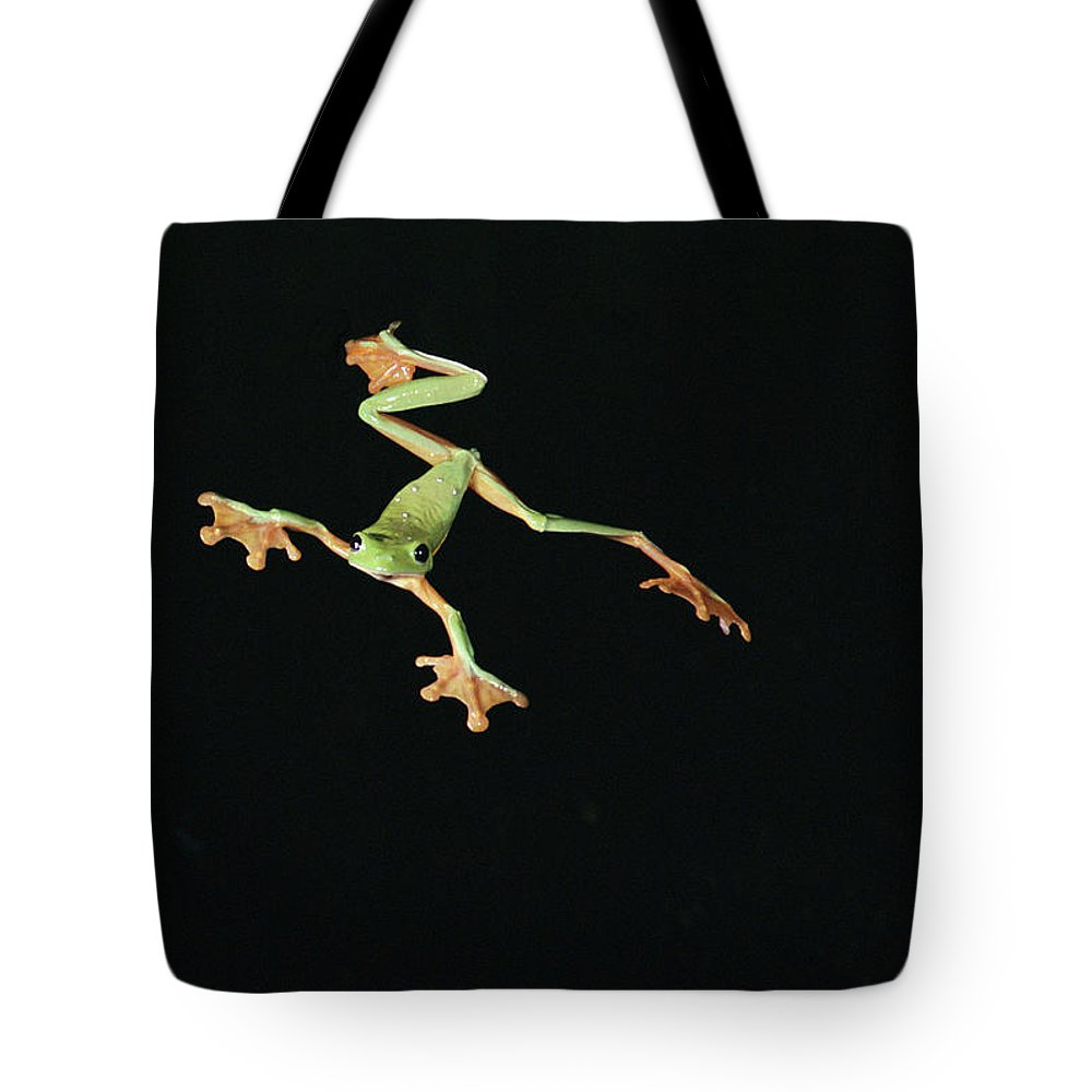 Color Image Tote Bag featuring the photograph Tree And Leaf Frog Jumping by Michael and Patricia Fogden