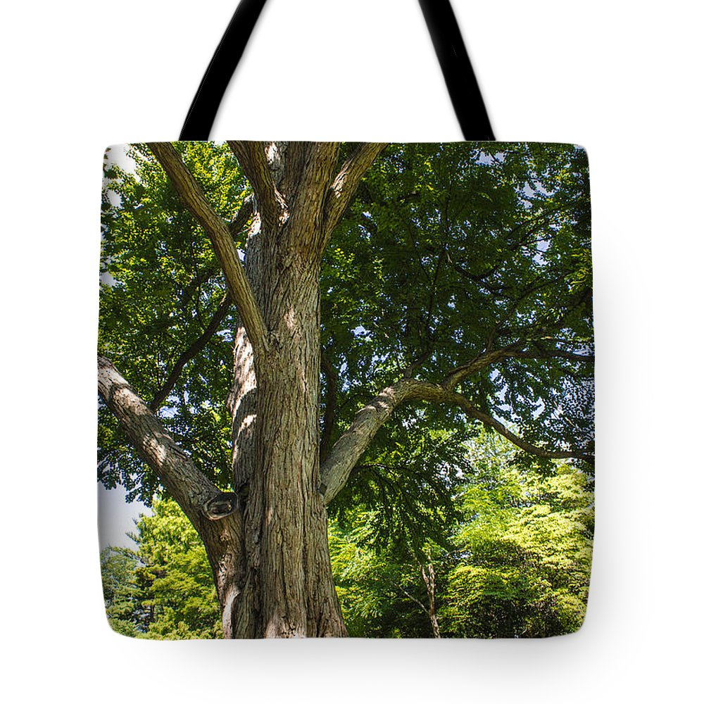 Msu Tote Bag featuring the photograph Tree At Msu by John McGraw