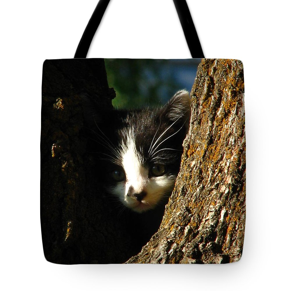 Art For The Wall...patzer Photography Tote Bag featuring the photograph Tree Cat by Greg Patzer