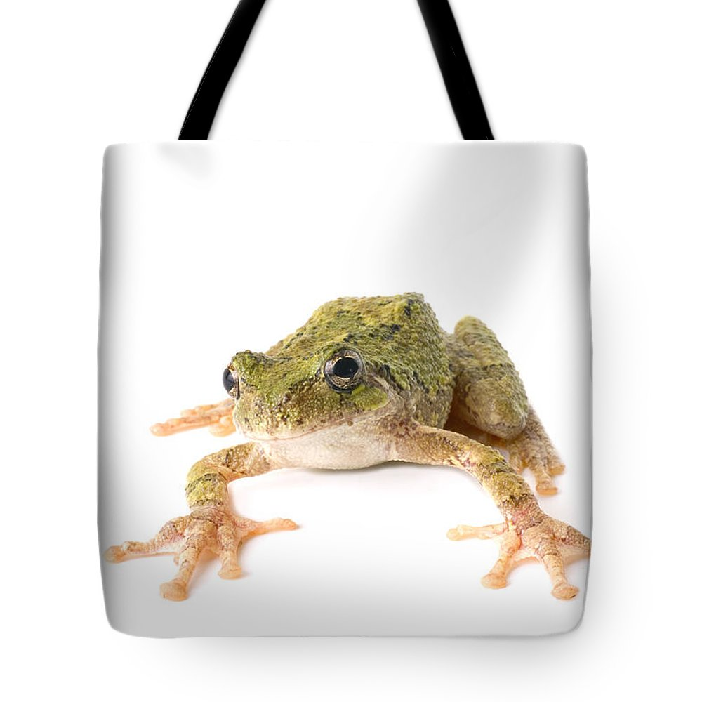 Amphibian Tote Bag featuring the photograph Tree Frog Ready To Jump by SAJE Photography