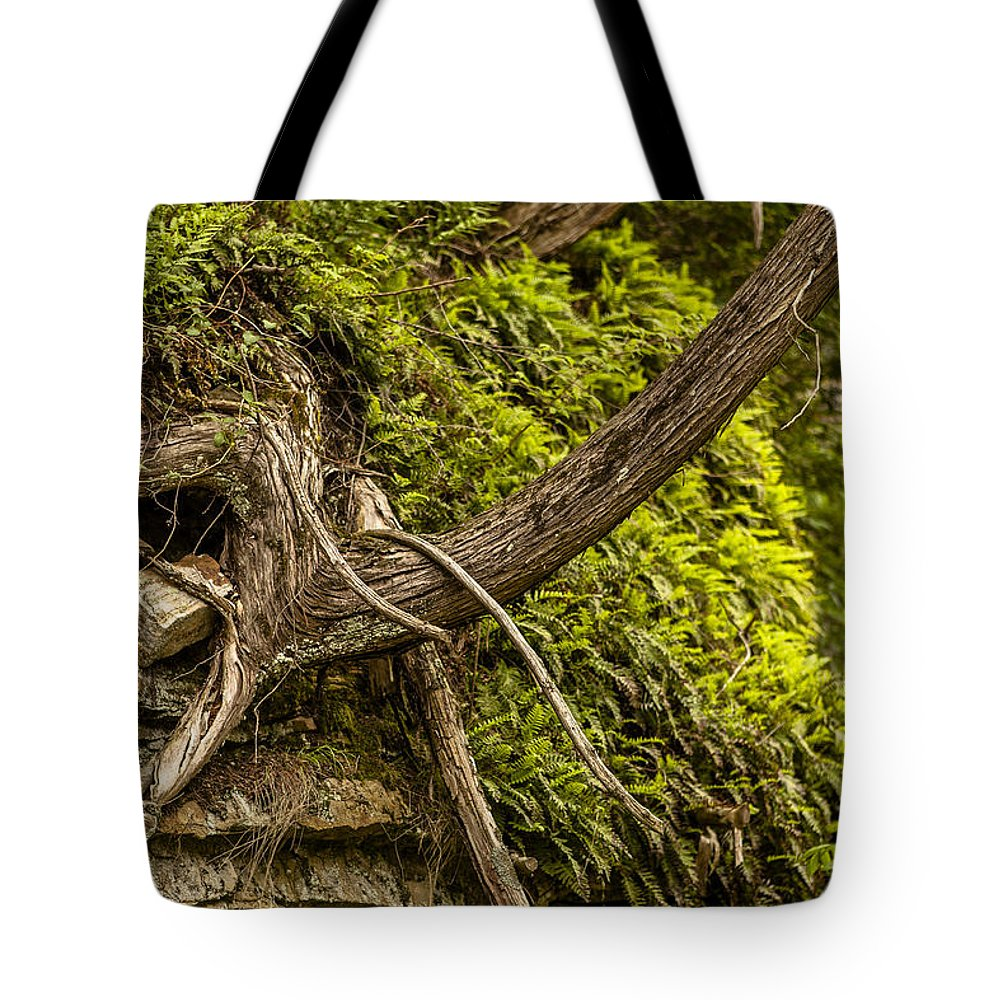 Ausable Chasm Ny Tote Bag featuring the photograph Tree Grows From Rock Outcrop by Eric Swan