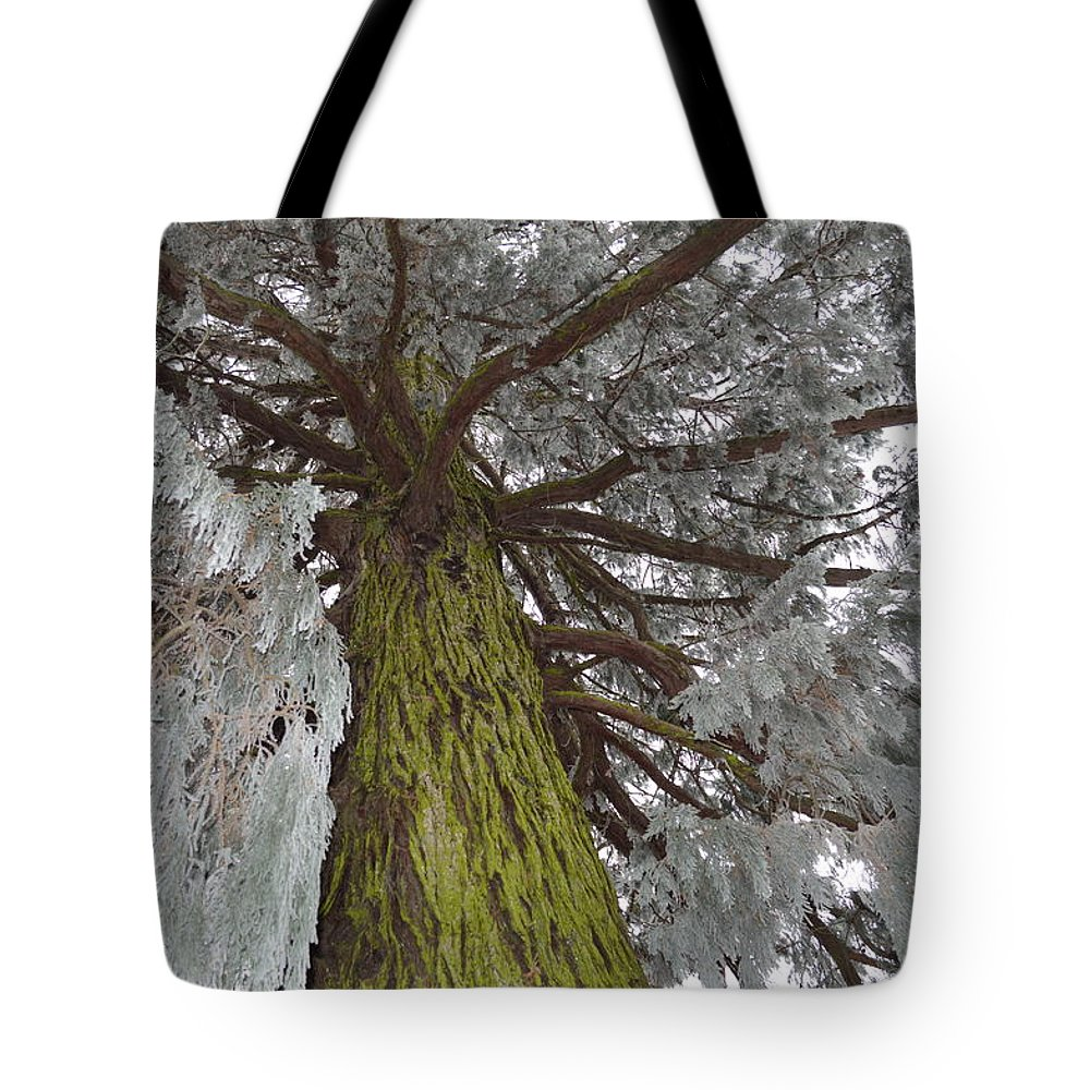 Nature Tote Bag featuring the photograph Tree In Winter by Felicia Tica