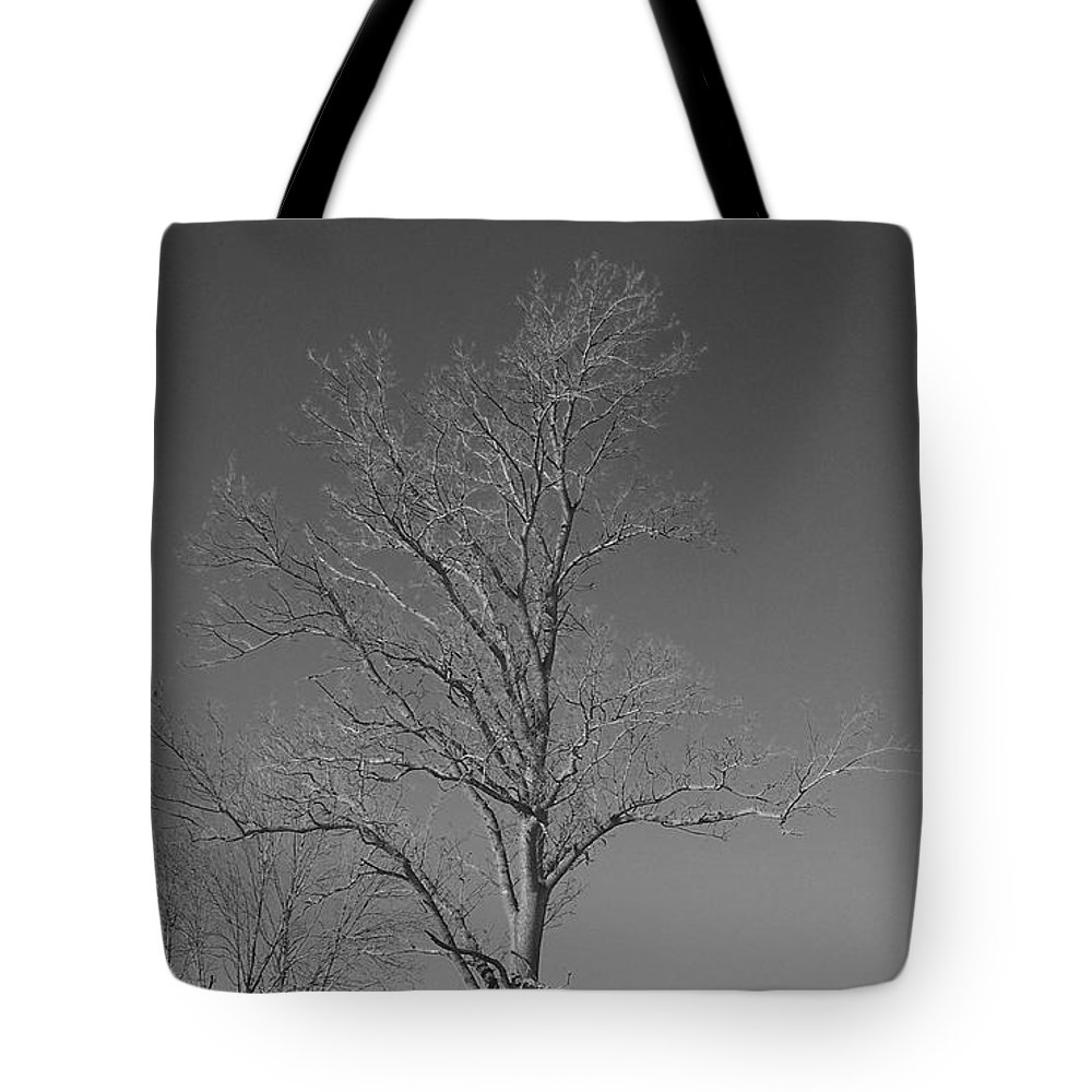 Tree Tote Bag featuring the photograph Tree In Winter by Michelle Miron-Rebbe