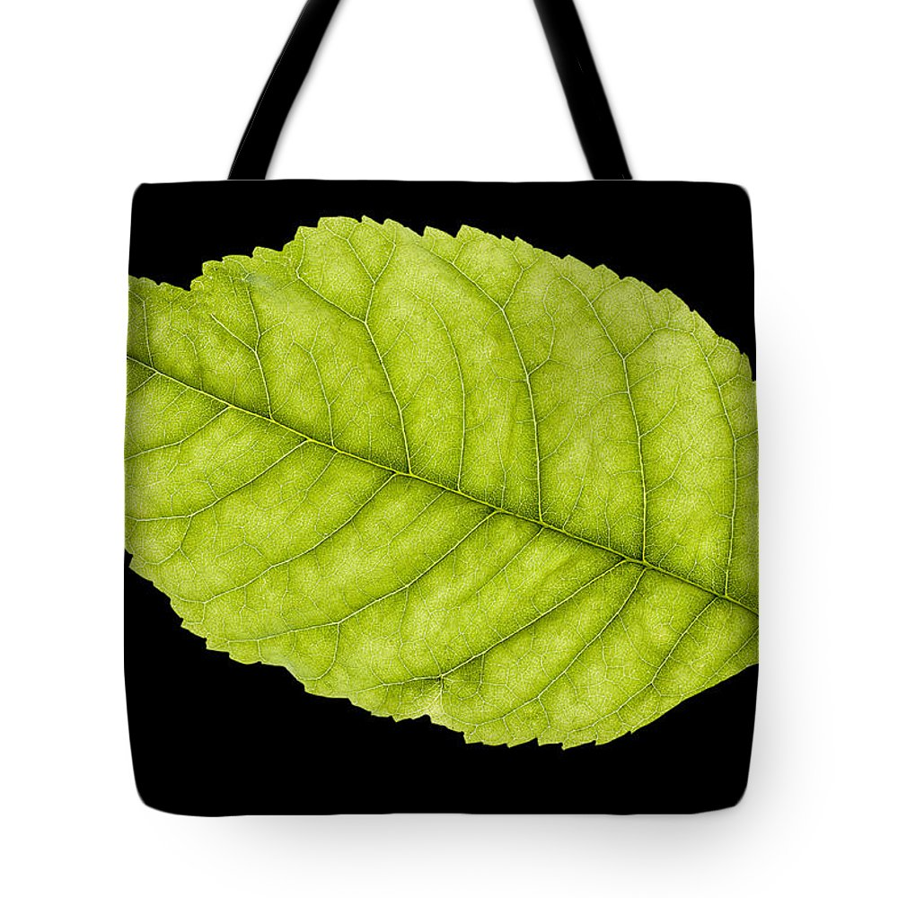 Leaf Tote Bag featuring the photograph Tree Leaf by Donald Erickson