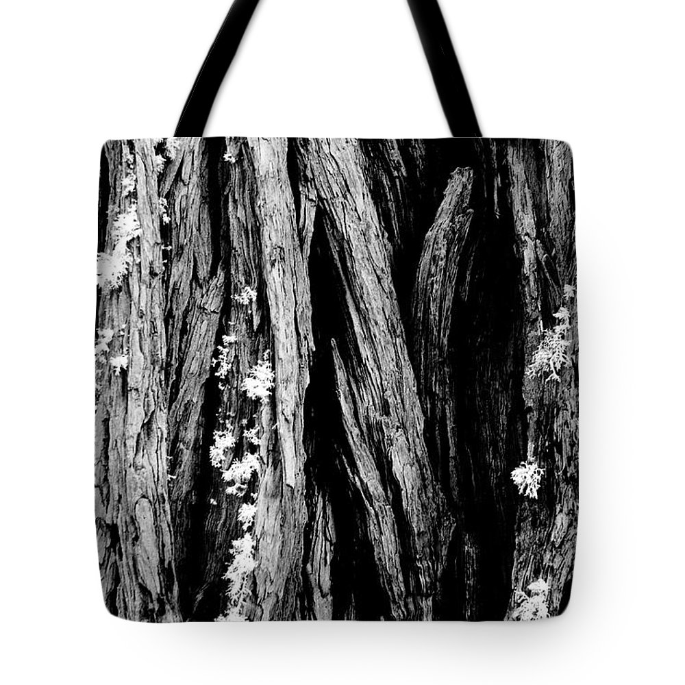 Tree Tote Bag featuring the photograph Tree Lines by Mick Burkey