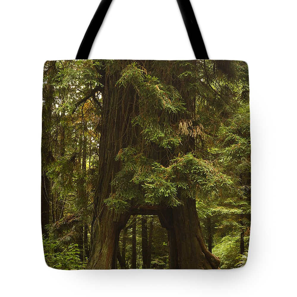 Redwood Tote Bag featuring the photograph Tree Redwood Ca 7 by John Brueske