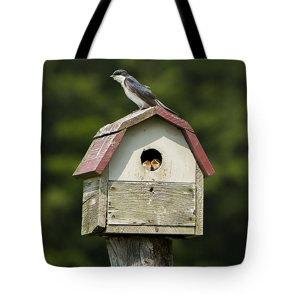 Tree Tote Bag featuring the photograph Tree Swallow With Young by Brad Marzolf Photography