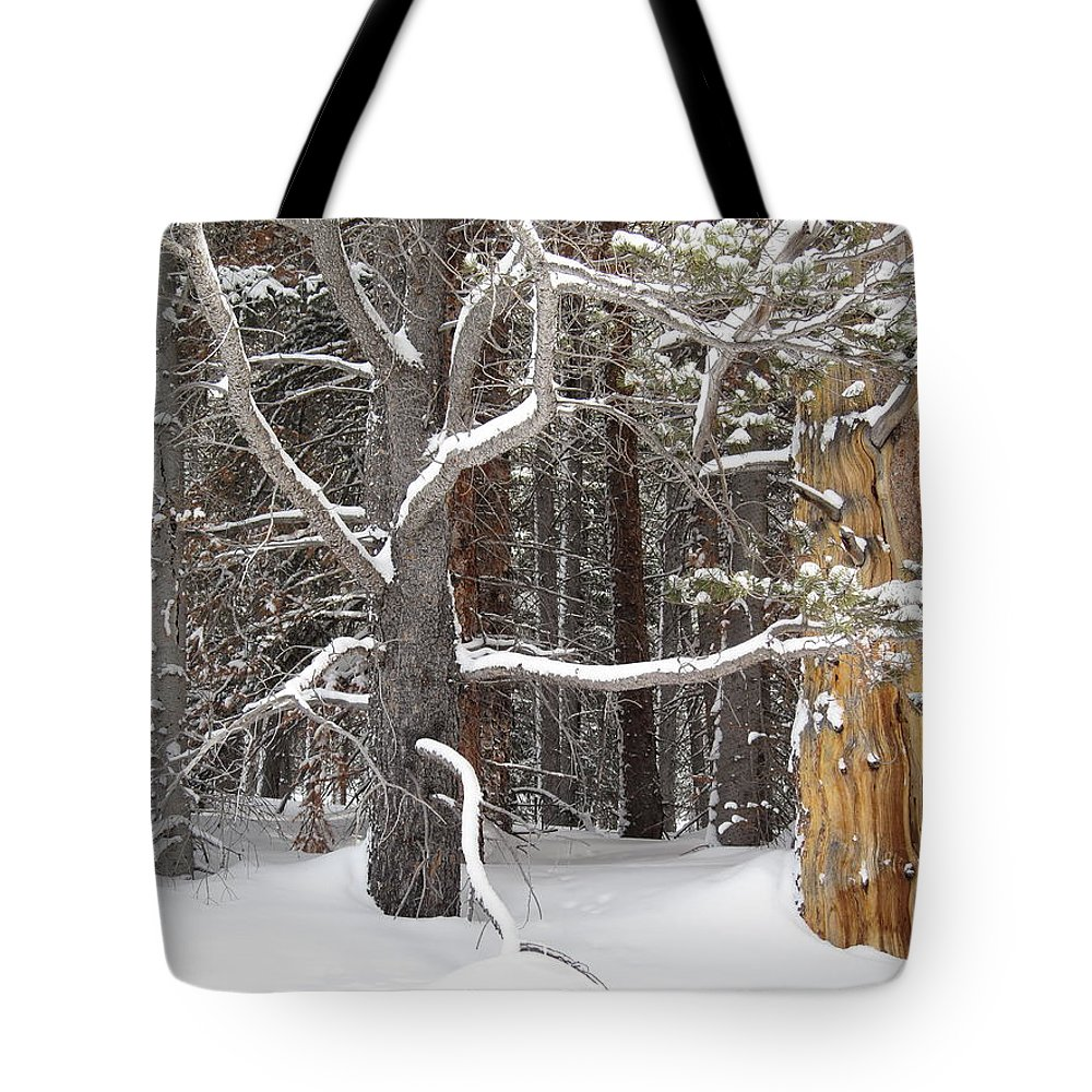 Landscape Tote Bag featuring the photograph Tree Talk by Eric Glaser