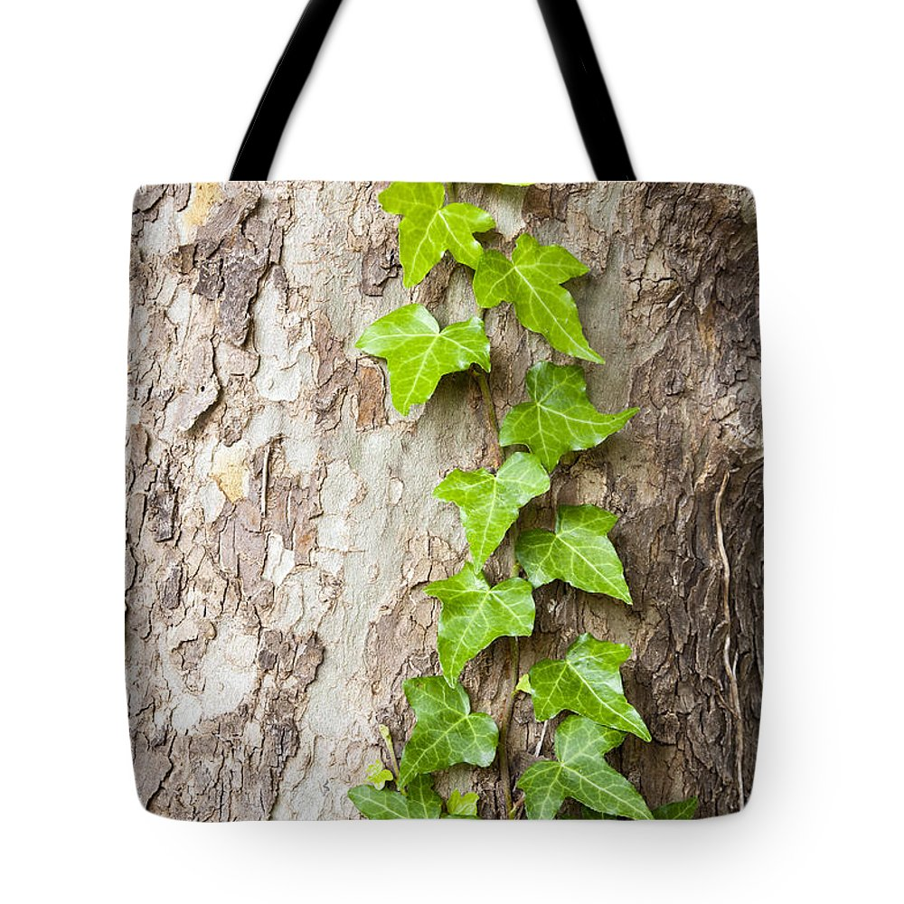 Tree Tote Bag featuring the photograph Tree Vine by Tim Hester
