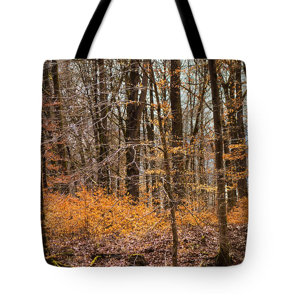 Trees Tote Bag featuring the photograph Trees In The Forest In March With Orange Leaves by Matthias Hauser
