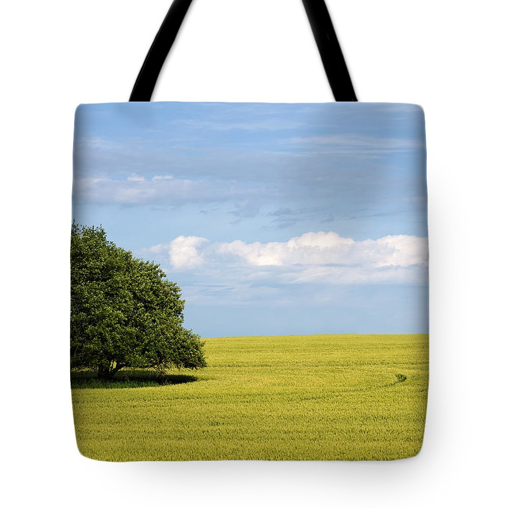 Grass Family Tote Bag featuring the photograph Trees In Wheat Field by Simplycreativephotography