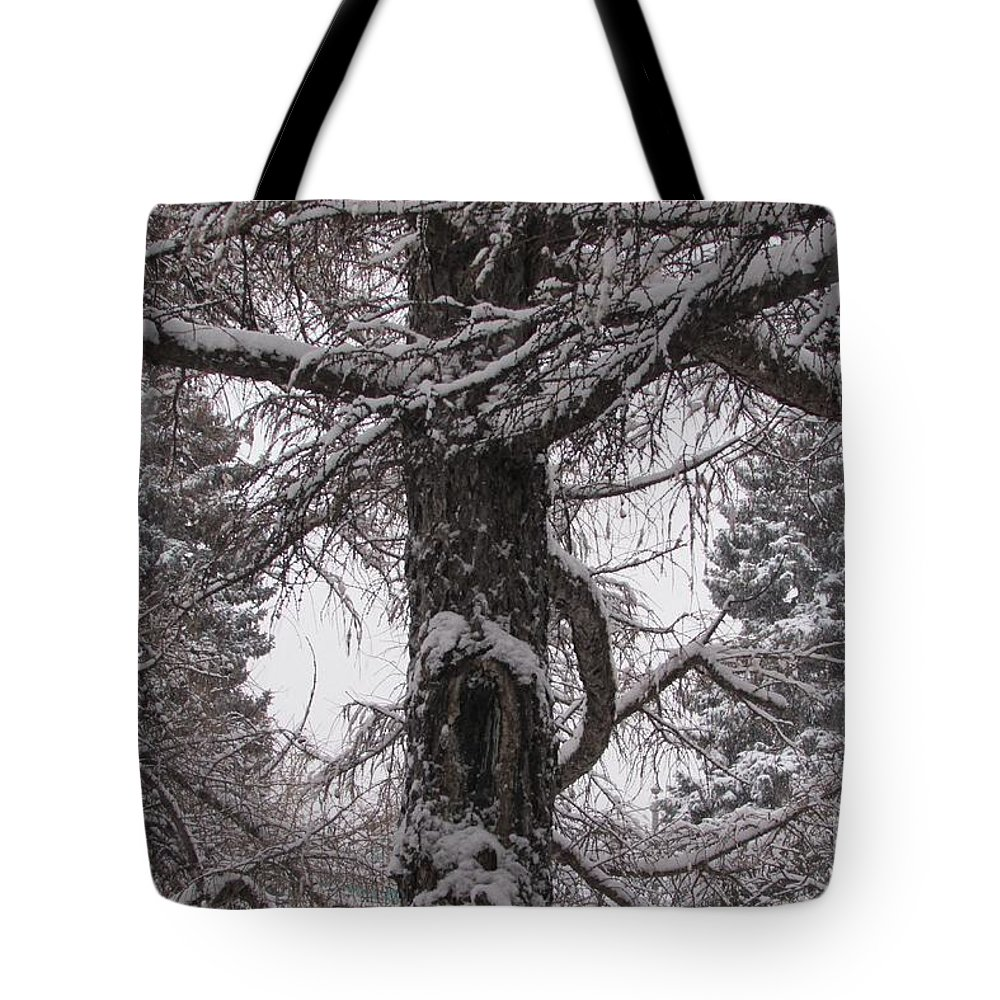 Anna Yurasovsky Tote Bag featuring the photograph Trees Under Snow by Anna Yurasovsky
