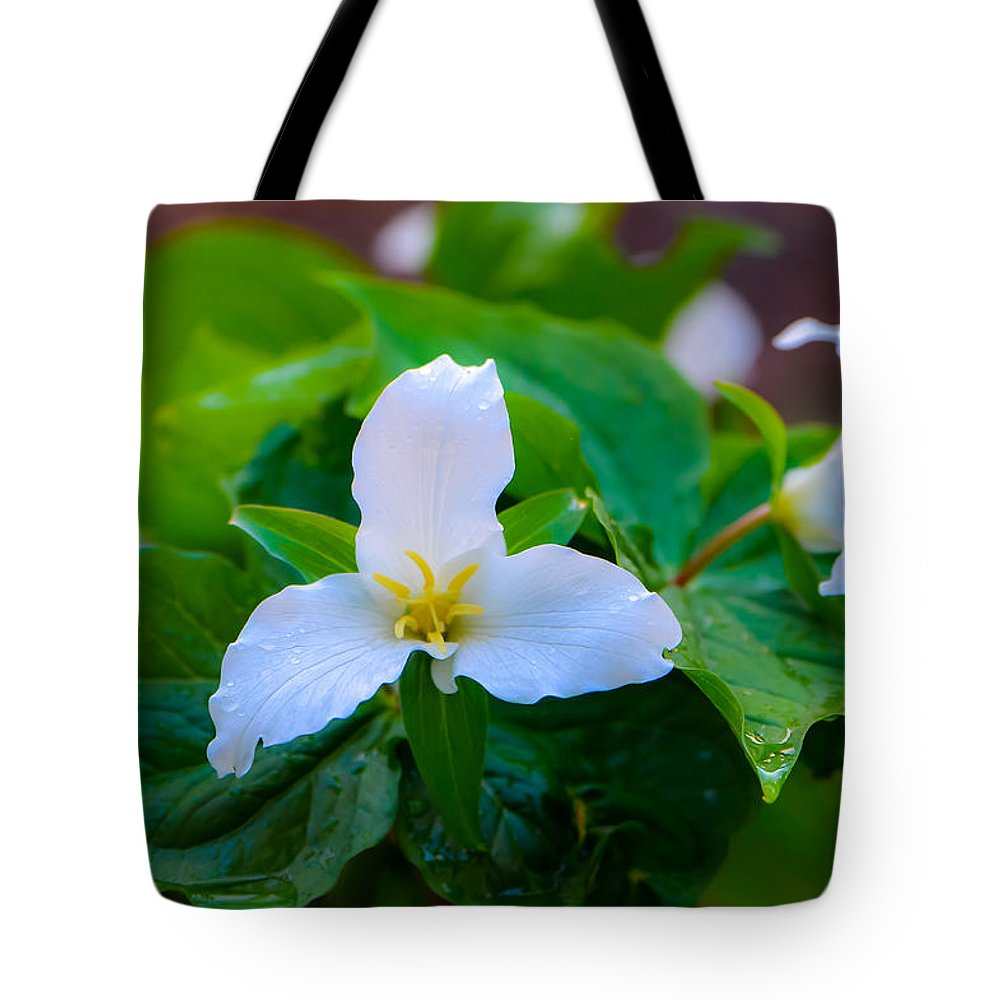 Trillium Tote Bag featuring the photograph Trillium by Randy Giesbrecht