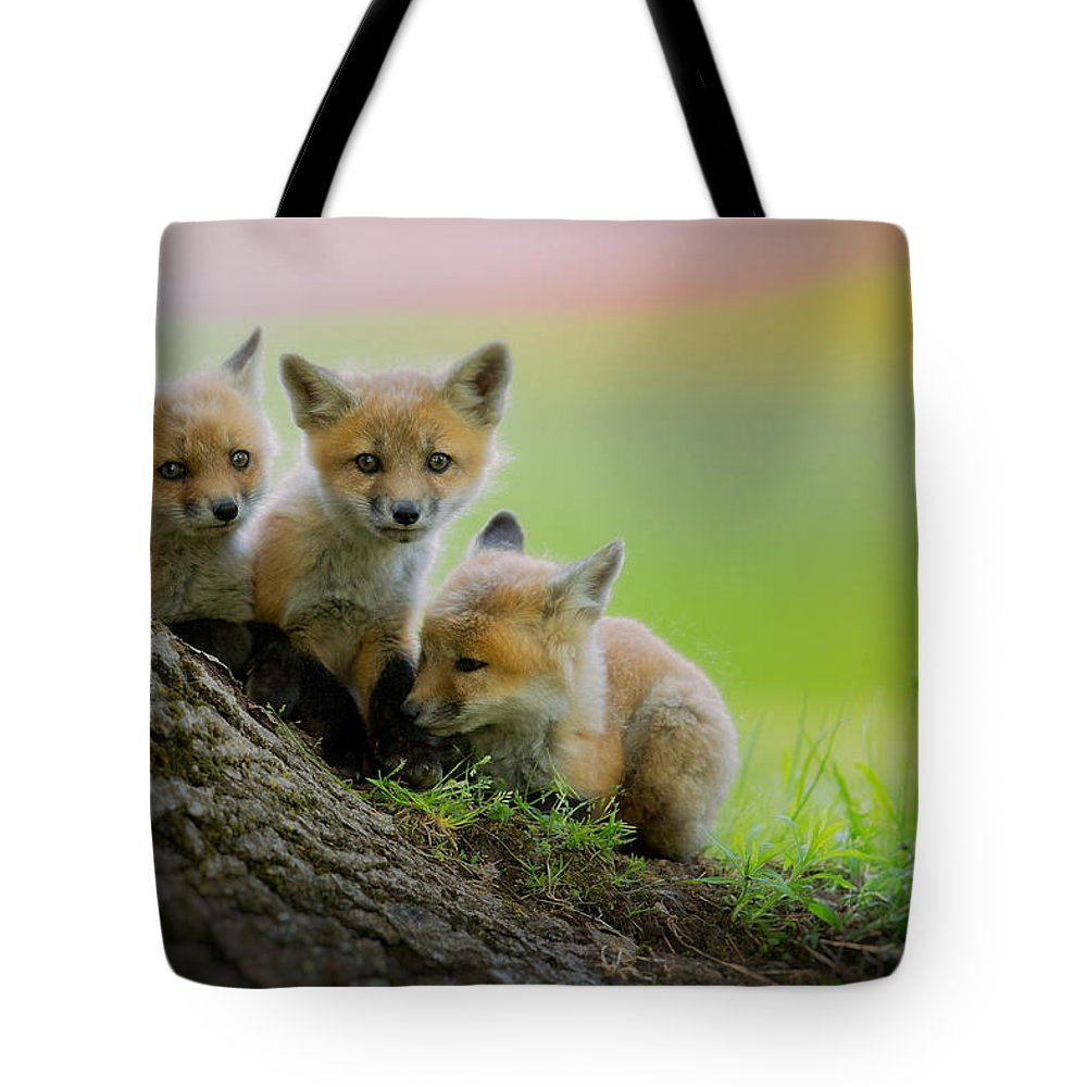 Fox Tote Bag featuring the photograph Trio Of Fox Kits by Everet Regal