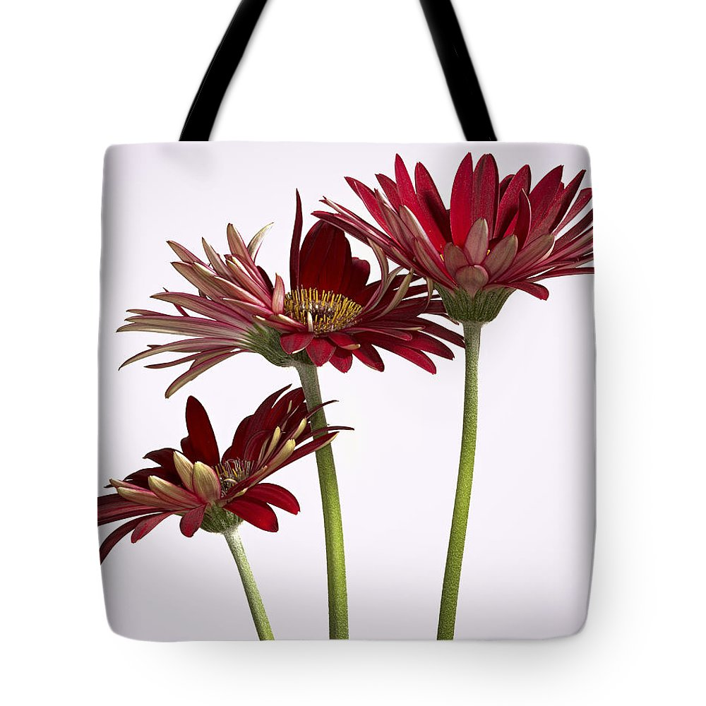 Group Of Gerbera Daisys Tote Bag featuring the photograph Trio Of Red Gerbera Daisys by Jean Noren