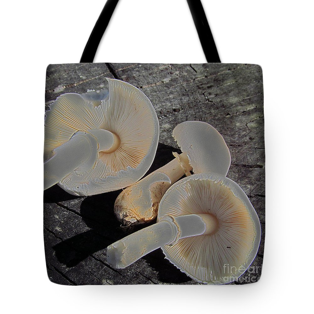 Mushrooms Tote Bag featuring the photograph Triple Down by Tina M Wenger