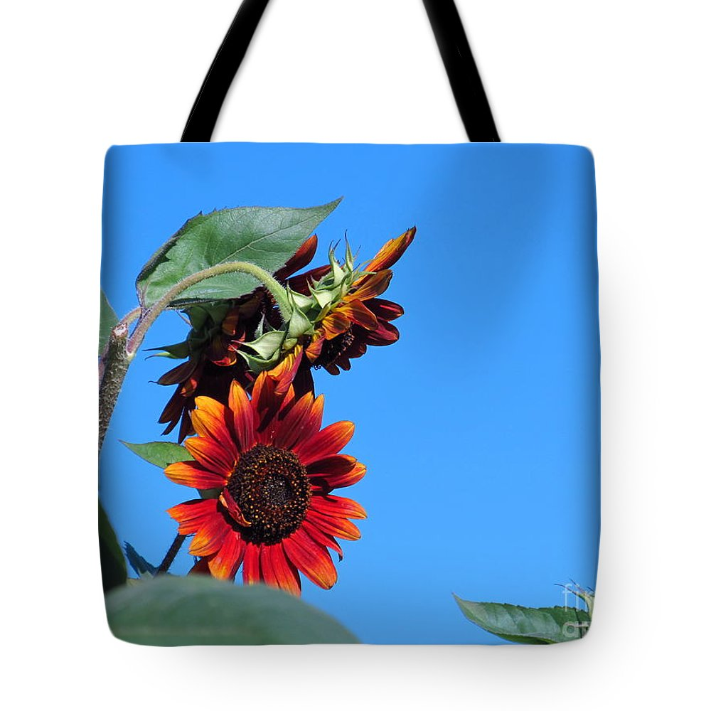 Sun Tote Bag featuring the photograph Triple Red Sunflowers by Tina M Wenger