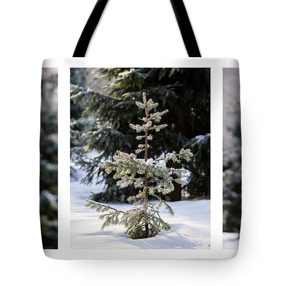 Santa Tote Bag featuring the photograph Triptych - Christmas Trees In The Forest - Featured 3 by Alexander Senin