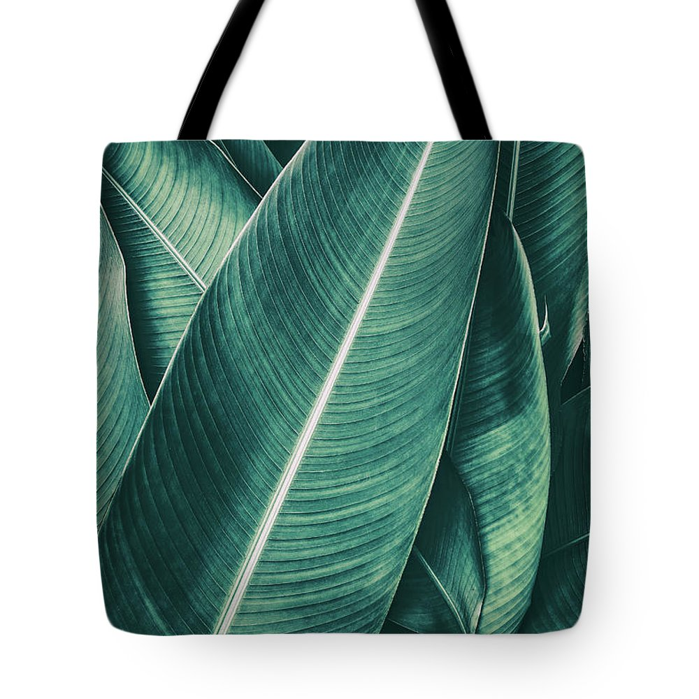 Spa Tote Bag featuring the photograph Tropical Palm Leaf, Dark Green Toned by Pernsanitfoto