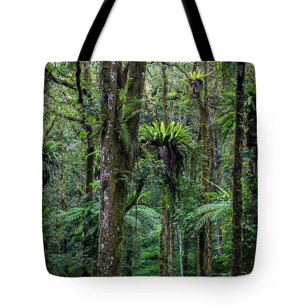 Tropical Rainforest Tote Bag featuring the photograph Tropical Rain Forest by Gavriel Jecan