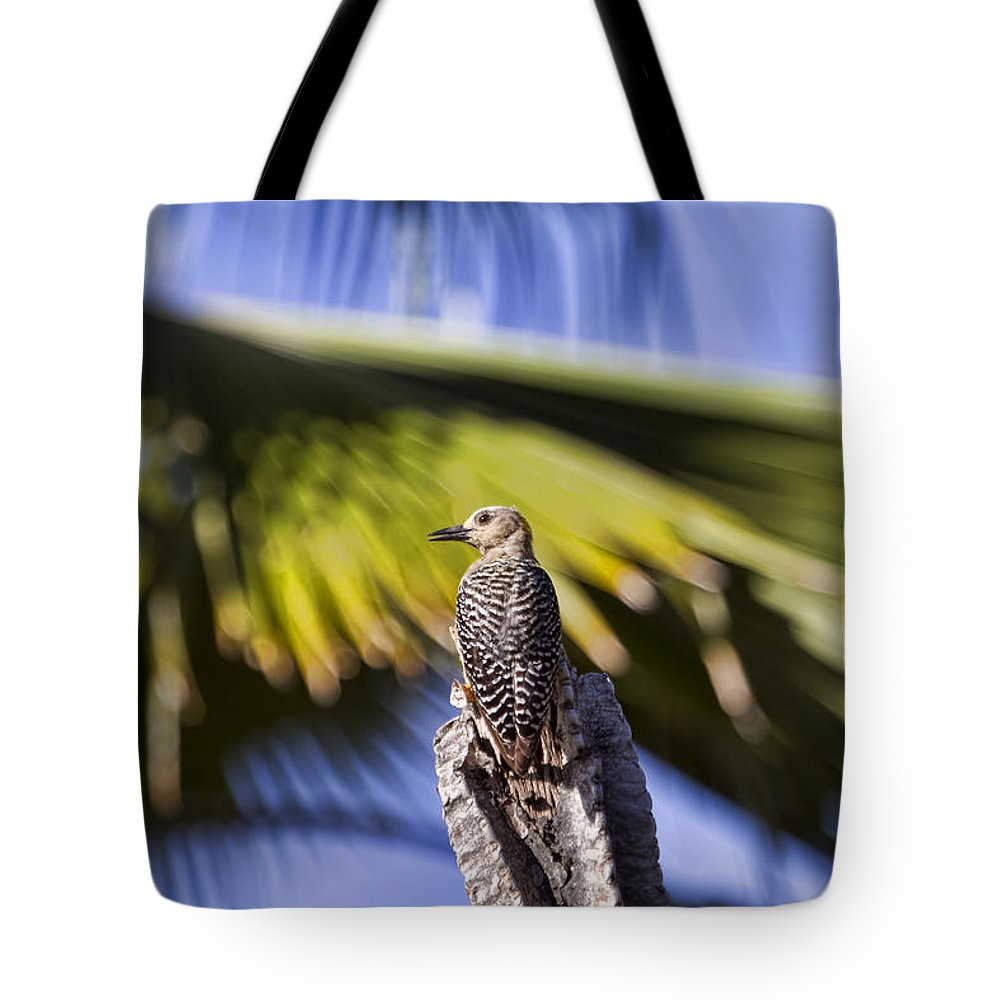 Woodpeckers Tote Bag featuring the photograph Tropical Woodpecker by Peggy Collins