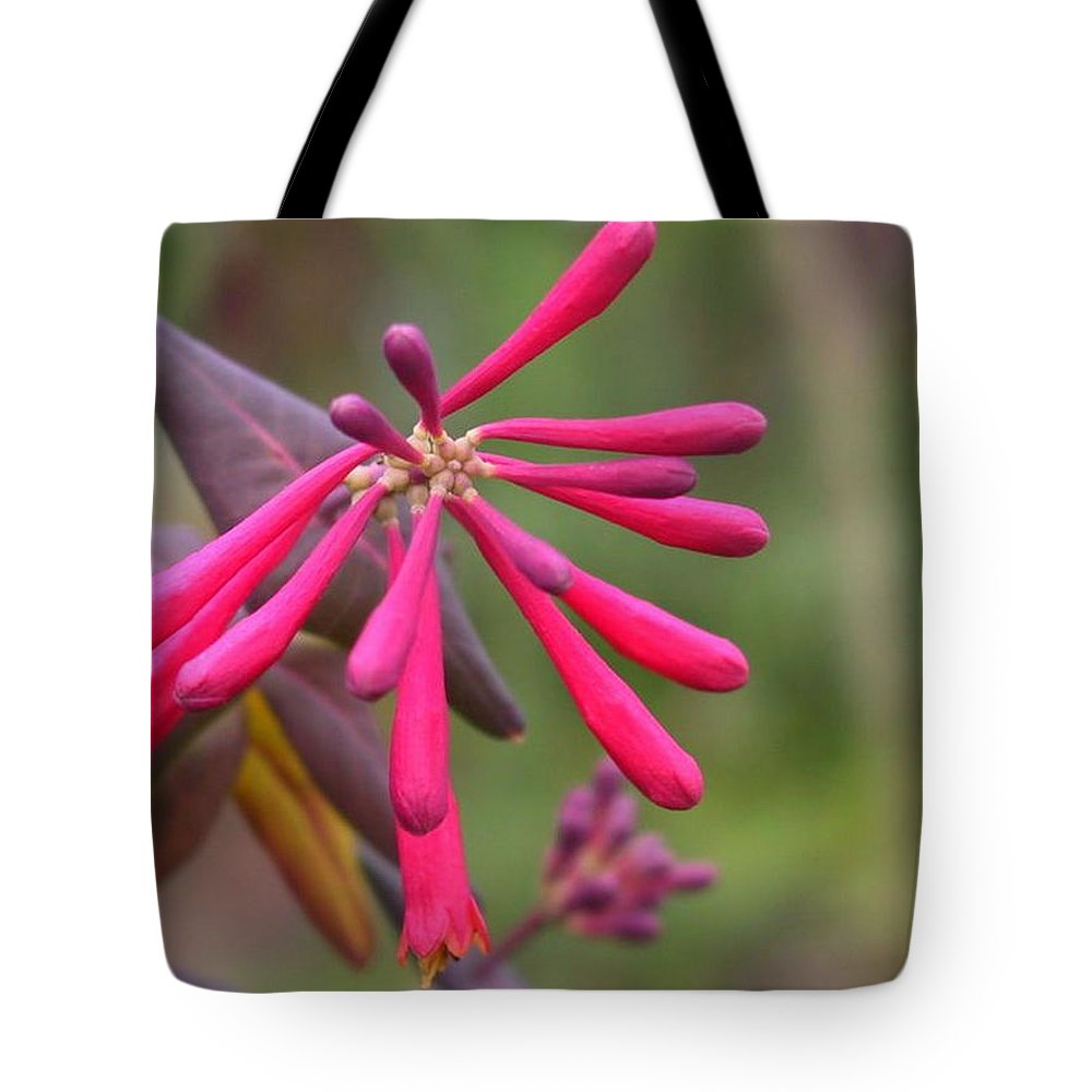 Flower Tote Bag featuring the photograph Trumpet Honeysuckle Buds Of Coral Woodbine by Taiche Acrylic Art