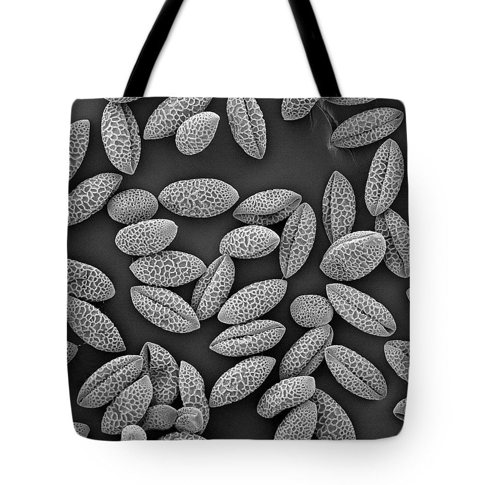 Black And White Tote Bag featuring the photograph Trumpet Lily Lilium Longiflorum Sem by Albert Lleal