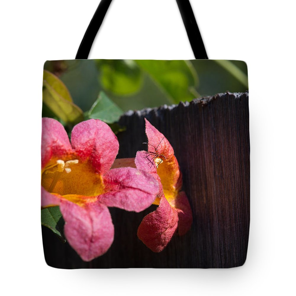 Trumpet Vine Tote Bag featuring the photograph Trumpet Vine With Friend by JG Thompson