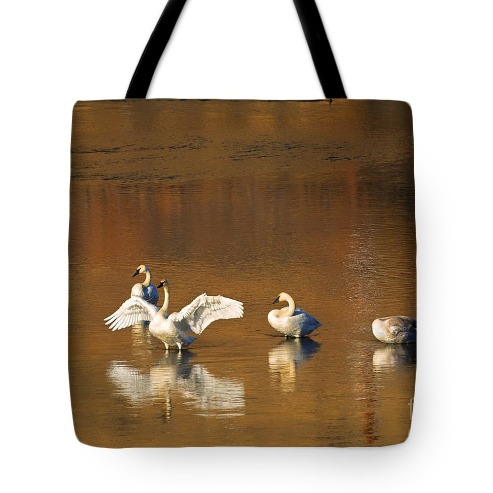 Swan Tote Bag featuring the photograph Trumpeter Ballet by Mike Dawson