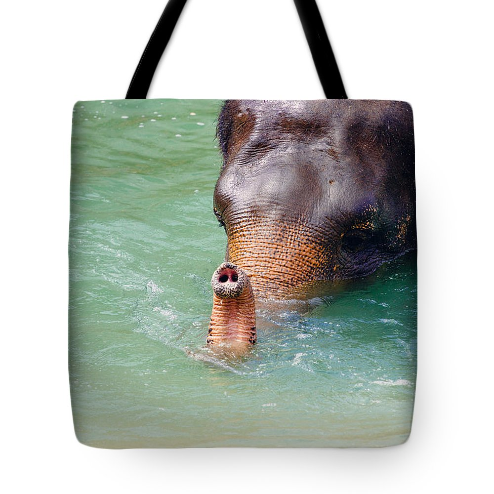 Elephant Tote Bag featuring the photograph Trunk Up by Pati Photography