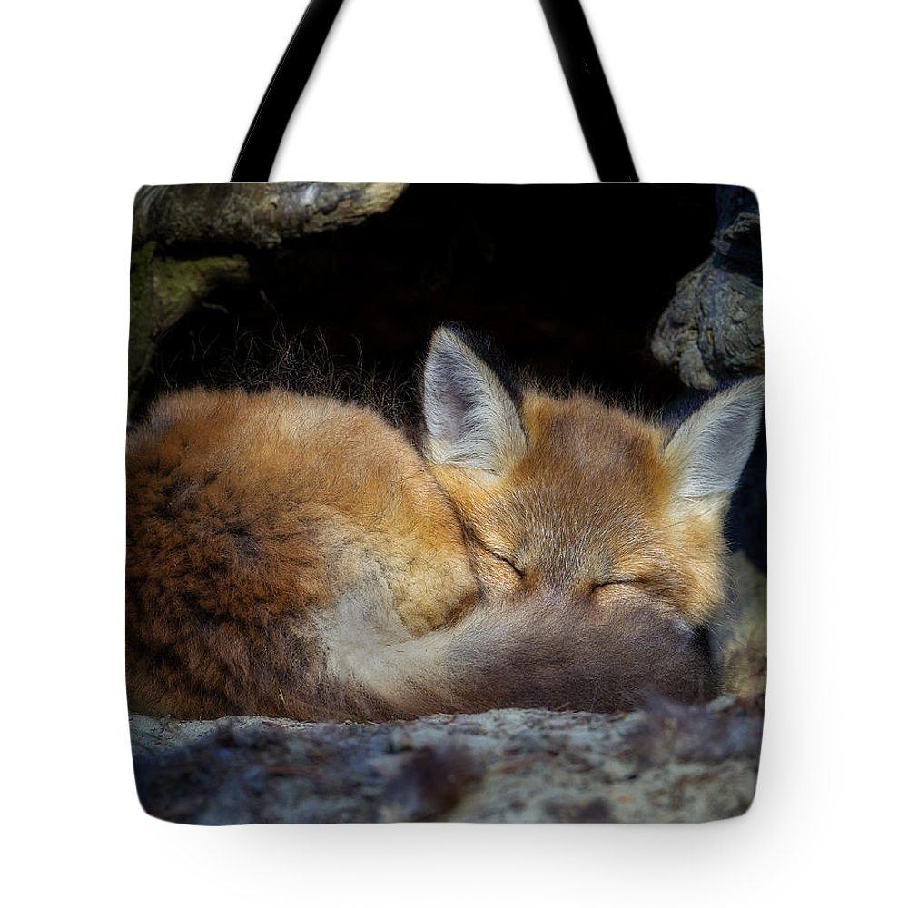 Red Fox Tote Bag featuring the photograph Fox Kit - Trust by John Vose