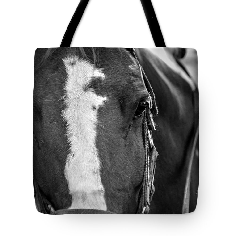 Horse Tote Bag featuring the photograph Trustworthy 03 Bw by J M Lister
