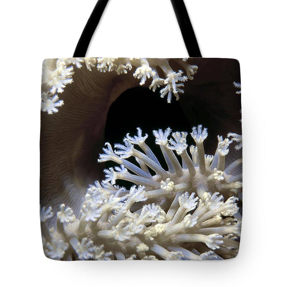 Micronesia Tote Bag featuring the photograph Tubastrea 3 by Dawn Eshelman