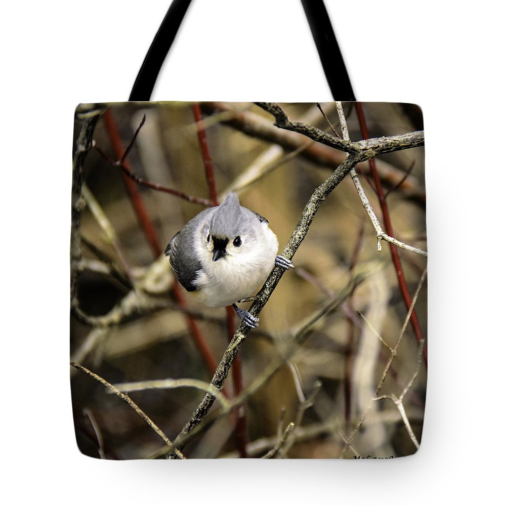 Tufted Titmouse Tote Bag featuring the photograph Tufted Titmouse On The Watch by LeeAnn McLaneGoetz McLaneGoetzStudioLLCcom
