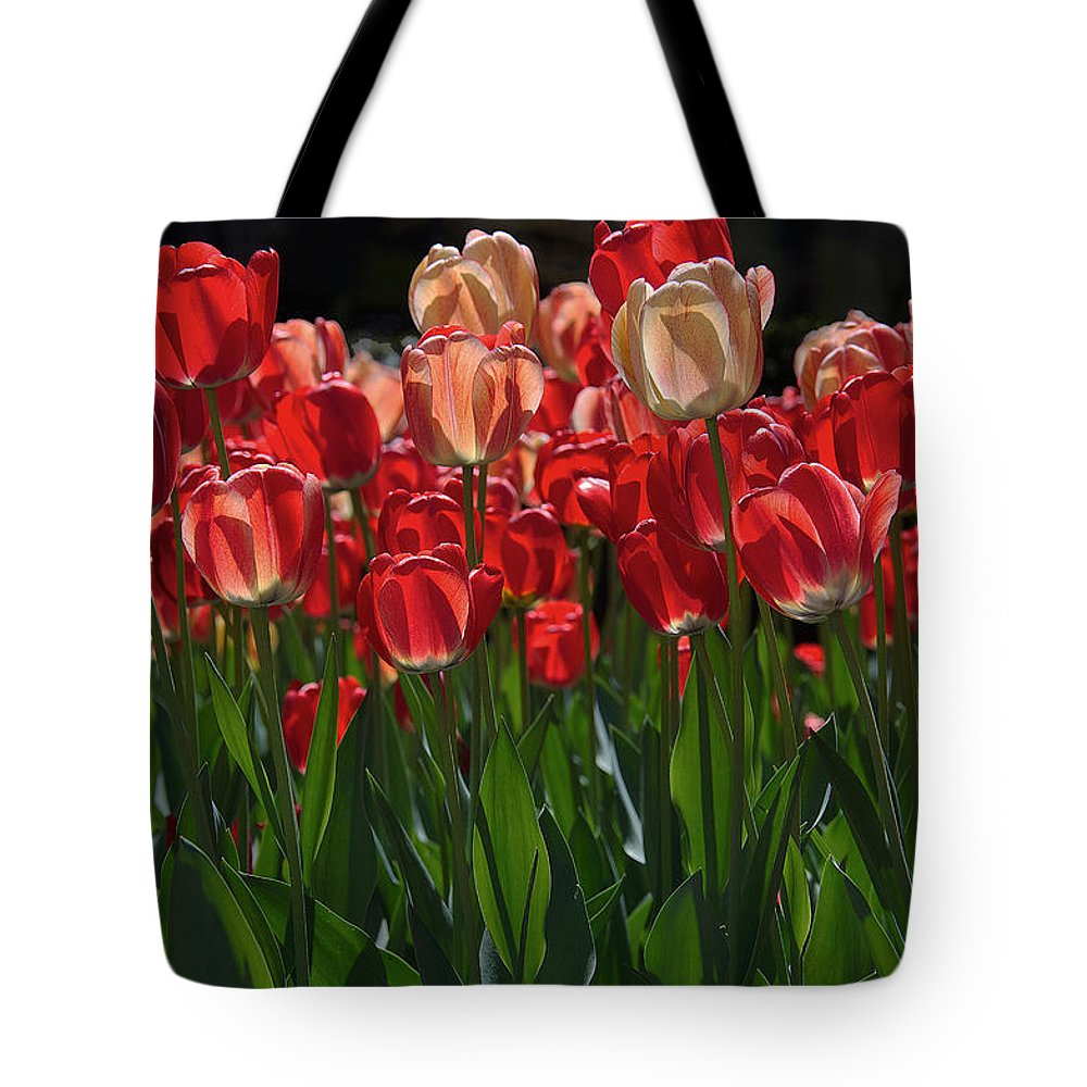 Cherry Tree Tote Bag featuring the photograph Tulip Bunch by David Resnikoff