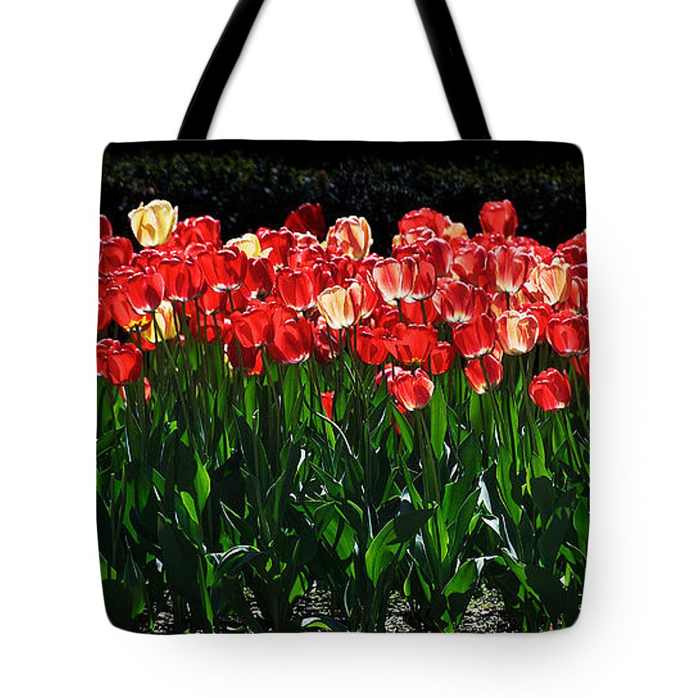Cherry Tree Tote Bag featuring the photograph Tulip Forest by David Resnikoff