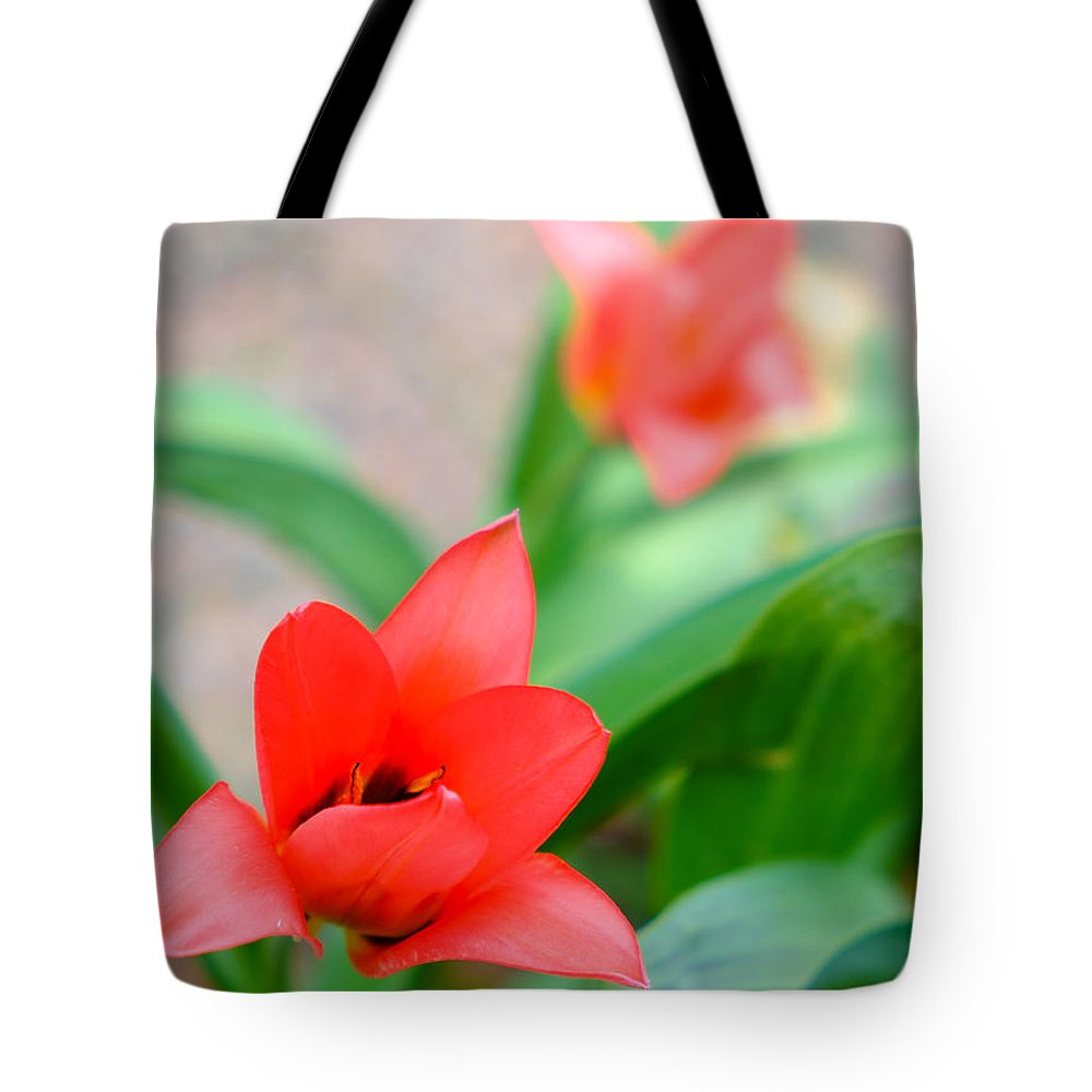 Photography Tote Bag featuring the photograph Tulip Of Dream by Ismo Raisanen