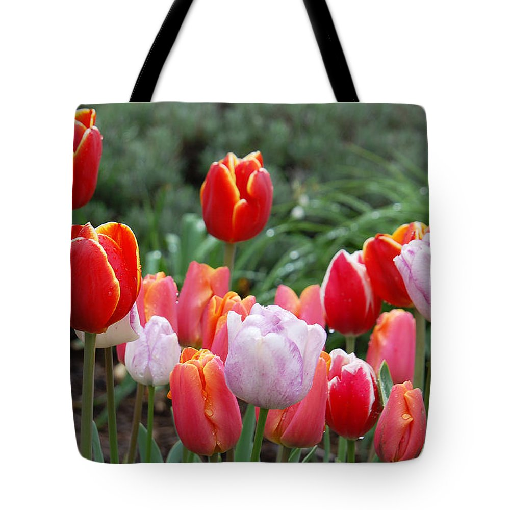Tulip Tote Bag featuring the photograph Tulip Tango by Suzanne Gaff