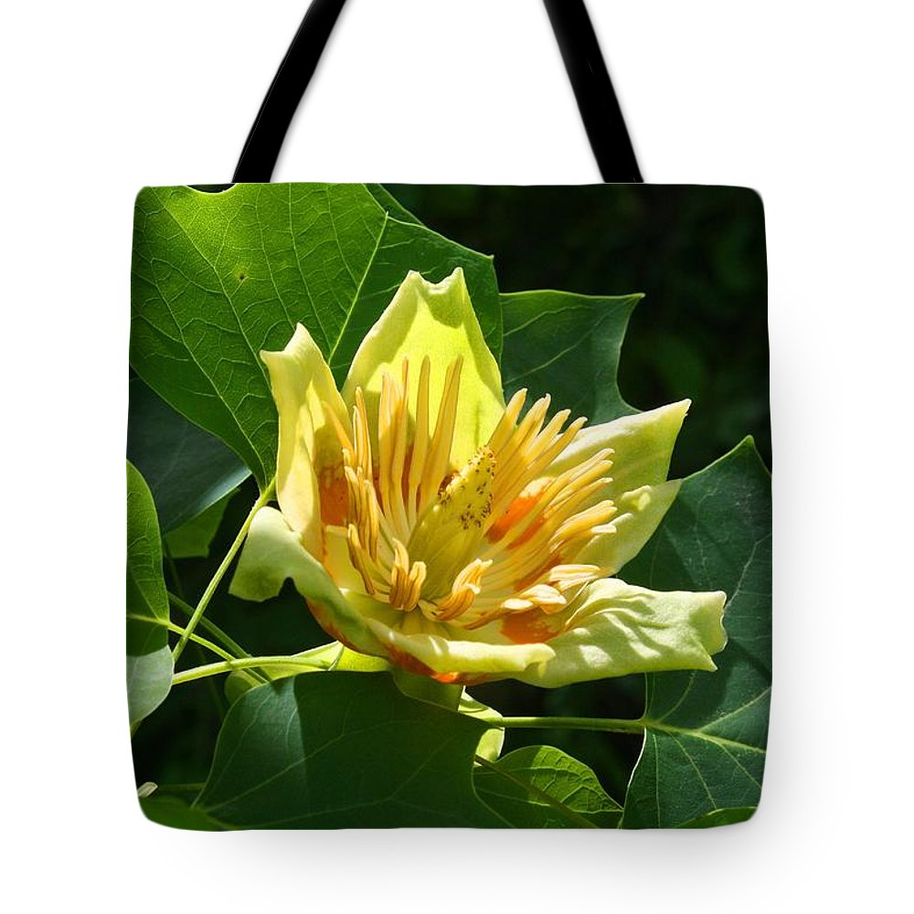 Tulip Tree Tote Bag featuring the photograph Tulip Tree by Kathryn Meyer