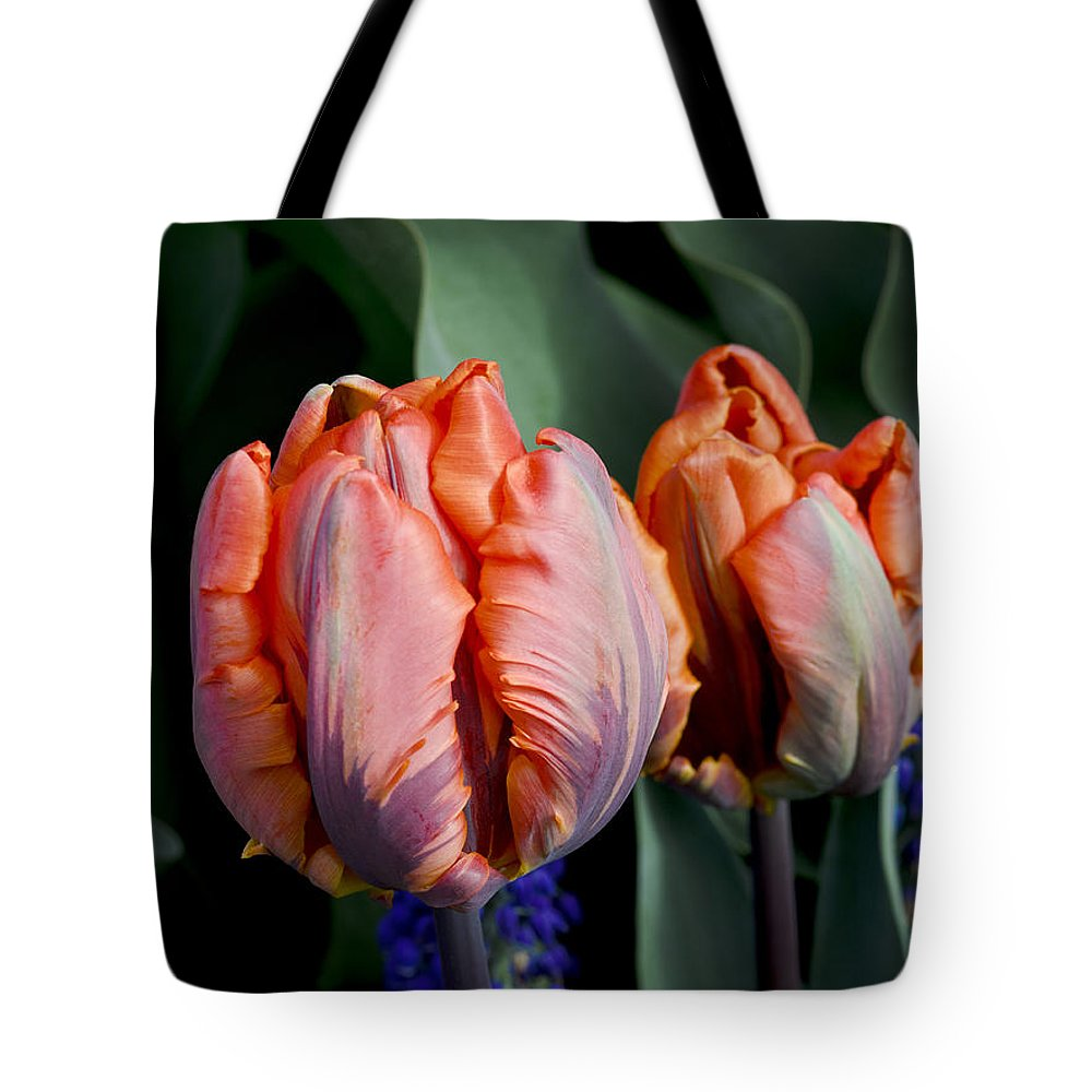 Irene Parrot Tote Bag featuring the photograph Irene Parrot Tulips by Bob VonDrachek
