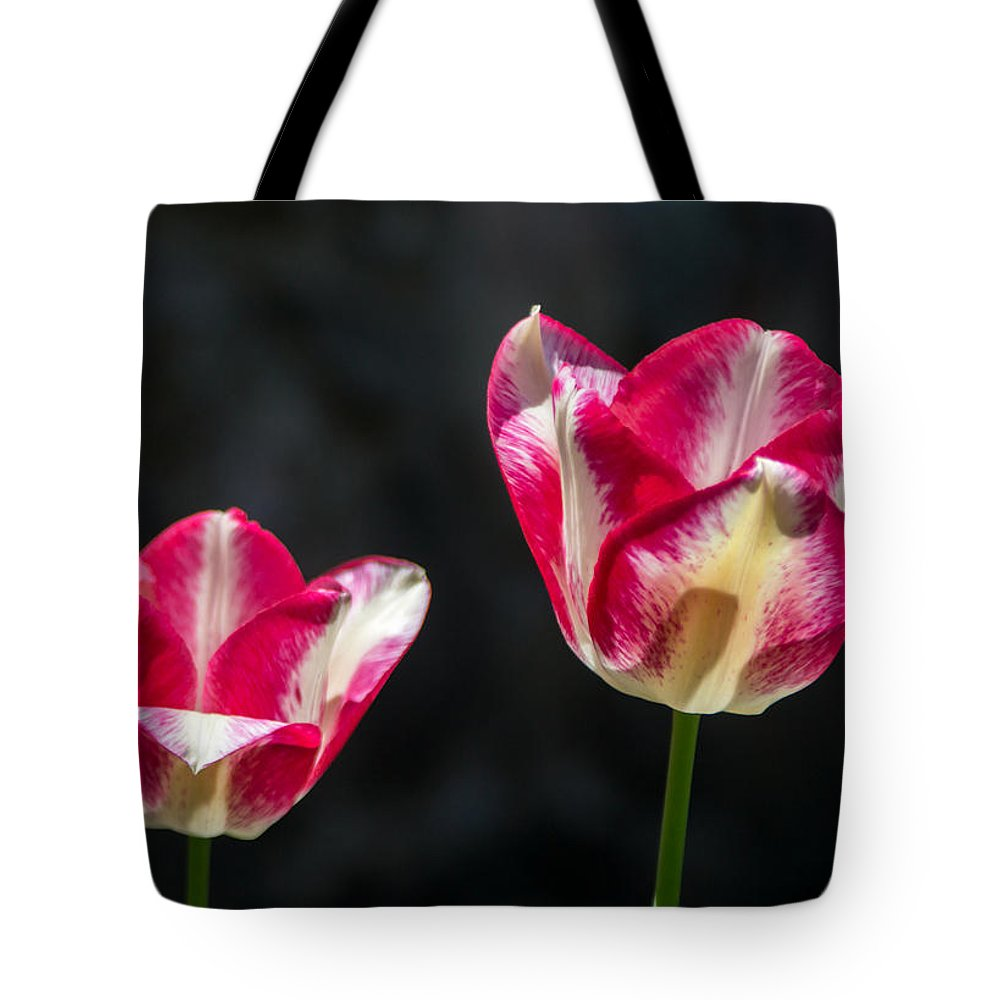 Tulip Tote Bag featuring the photograph Tulips Of A Kind by Photographic Arts And Design Studio